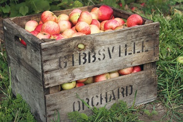 Apple Orchards are Open for Outdoor Fun